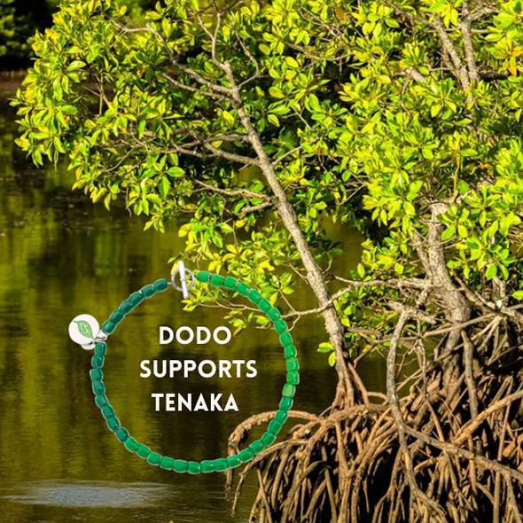 SPECIAL PROJECT: Dodo supportsTenaka